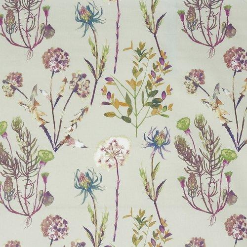 Allium Jewel