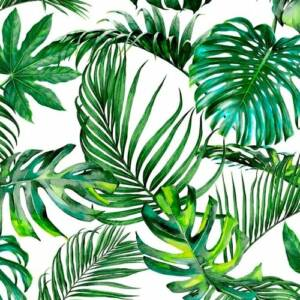 TROPICAL FOREST EXPRESSIONS BY STUART GRAHAM